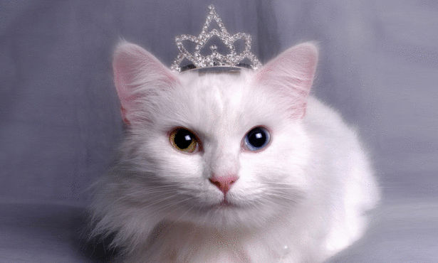 Cat sitting with crown and pearls