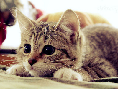 a-parasite-found-in-cats-could-be-manipulating-our-brains